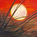Blazing Sun And Wind-blown Grasses by Nadine Rippelmeyer