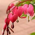 Bleeding Hearts In The Park by Steve Augustin