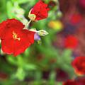 Bleeding Spring 3 by Alex Art and Photo