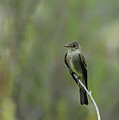 Blending In by Donna Blackhall