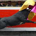 Blind Bull by Rafa Rivas