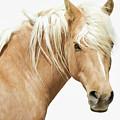 Blonde Stallion by Athena Mckinzie