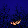 Blood Moon And Winter Trees by Dwain Patton