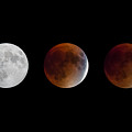 Blood Moon Eclipse by Sandy Roe