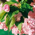 Bloom by Jonathan Michael Bowman