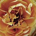 Bloom by Kate Bentley