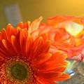 Bloom by Michaela Dew