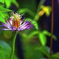 Bloom N Bud  by Diane Lindon Coy