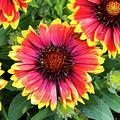 Bloom by Robert Briggs