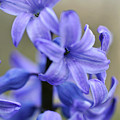 Bloomin Blue by Glenn Gordon