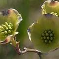 Bloomin' by Linda Benoit