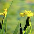 Blooming At Green Lake by Robert Briggs