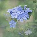Blooming Blues by Kim Hojnacki