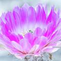 Blooming Cactus by Debra Martz