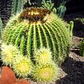 Blooming Cactus Two by Joyce Dickens