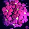 Blooming Crush by Sara Kinney