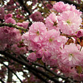 Blooming by Darielle Mesmer