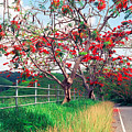 Blooming Flamboyan Trees Along A Country Road by George Oze