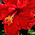 Blooming Flower 2 by Allen Williamson