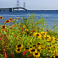 Blooming Flowers By The Bridge At The Straits Of Mackinac by Randall Nyhof