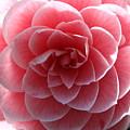 Blooming by Lauri Novak