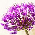 Blooming by Linda Ryma