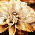 Blooming Perfection by Lori Dobbs