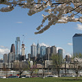 Blooming Philadelphia  by Clay Cofer