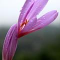 Blooming Purple Flower by Vladi Alon