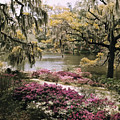 Blooming Shrubs And Trees by B. Anthony Stewart