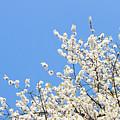 Blooming Tree by Anastasy Yarmolovich