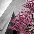 Blooming Tree Near Disney Hall by Endre Balogh