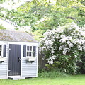 Blooming Tree Next To Shed by John G Erlandson