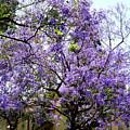 Blooming Tree With Purple Flowers by Mariola Bitner