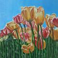 Blooming Tulips by Yasha Sharma