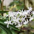 Blooming White Flower Spike by James Fannin