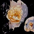 Bloomnoir by Lin Petershagen