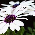 Blooms Of Three by Lori Dobbs