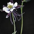 Blossom by Barbara Keith