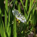 Blossom Found by Alana Thrower
