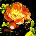 Blossom by Ivana Kovacic