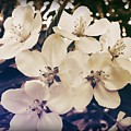 Blossom by JAMART Photography