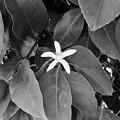 Blossom  by Peggy Leyva Conley