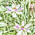 Blossom Pink Lotus Flower by Jeelan Clark