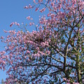 Blossom Time by Florene Welebny