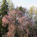 Blossom Tree Impressionist by Deborah  Crew-Johnson