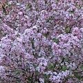 Blossom Tree by MTBobbins Photography