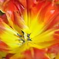Blossom  by Vicky Tubb