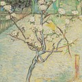 Blossoming Pear Tree by Joy of Life Art Gallery - Vincent Van Gogh