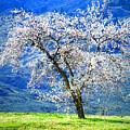 Blossoming by Tara Turner